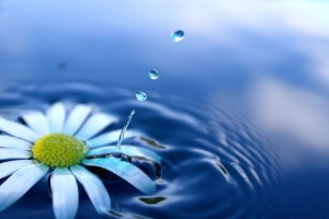 Nina Skaret_Flower on The Water_ZEVrQg